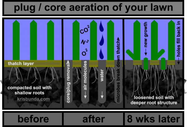 Explanation Image: plug / core aeration of your lawn