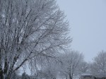 <b>Midwest Winter Beauty (Yes, it does happen occasionally)</b>