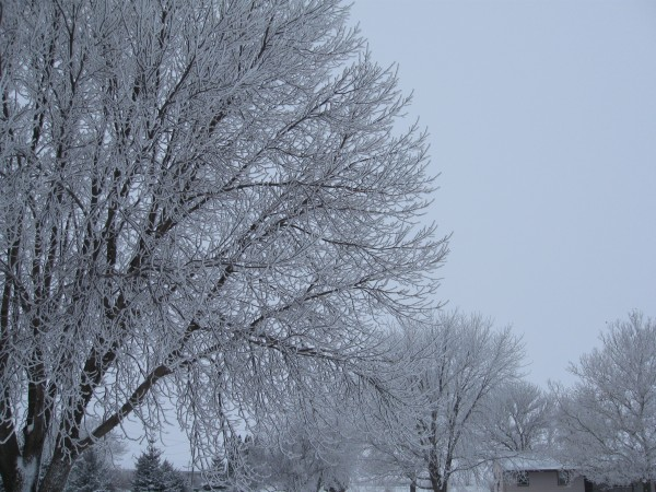 Christmas 2010 - Midwestern Winter Beauty 1