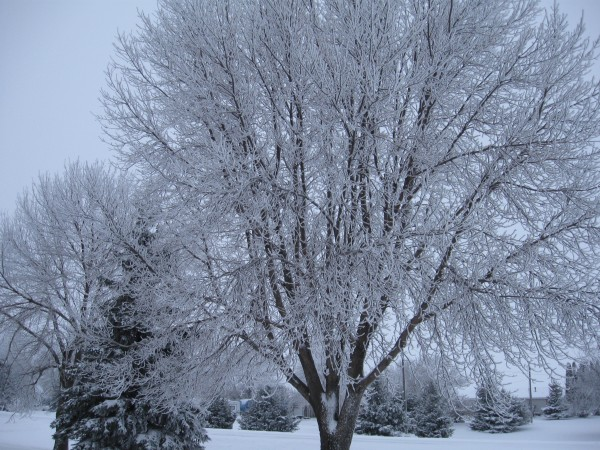 Christmas 2010 - Midwestern Winter Beauty 2