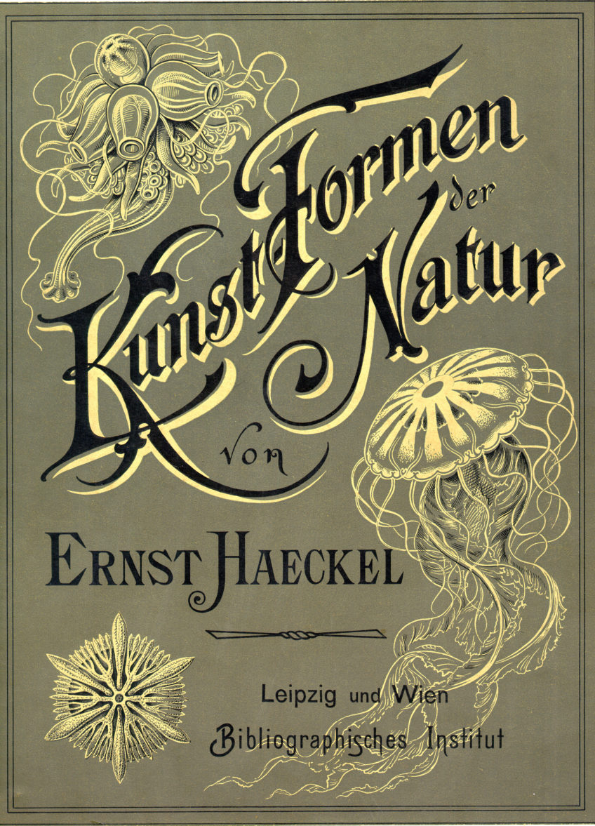 100 Beautiful Illustrations of Biologist Ernst Haeckel – Art Forms of Nature